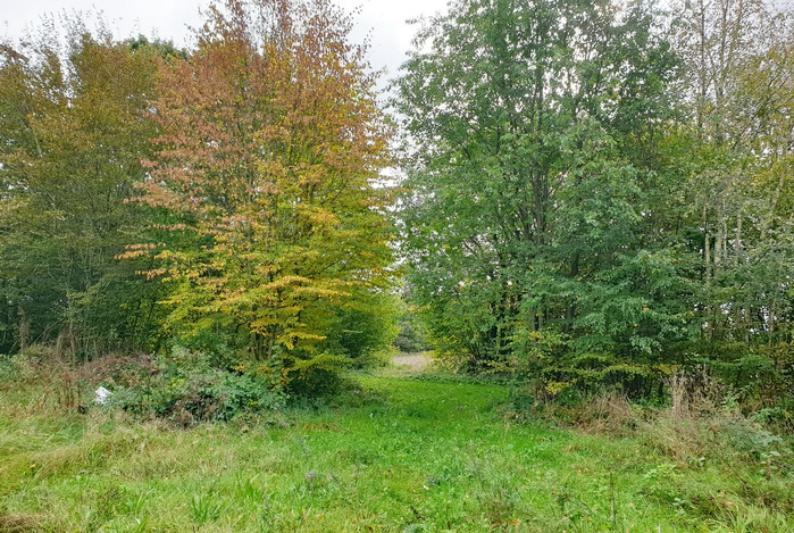 angrenzender Waldweg