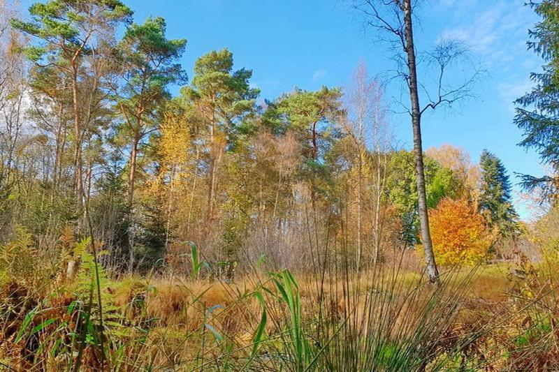 TRAUMhaftes FERIENparadies - RIESEN Natur- & Waldgrundstück an der Este mit Altbestand !