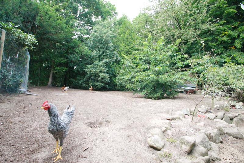 Hühnerauslauf